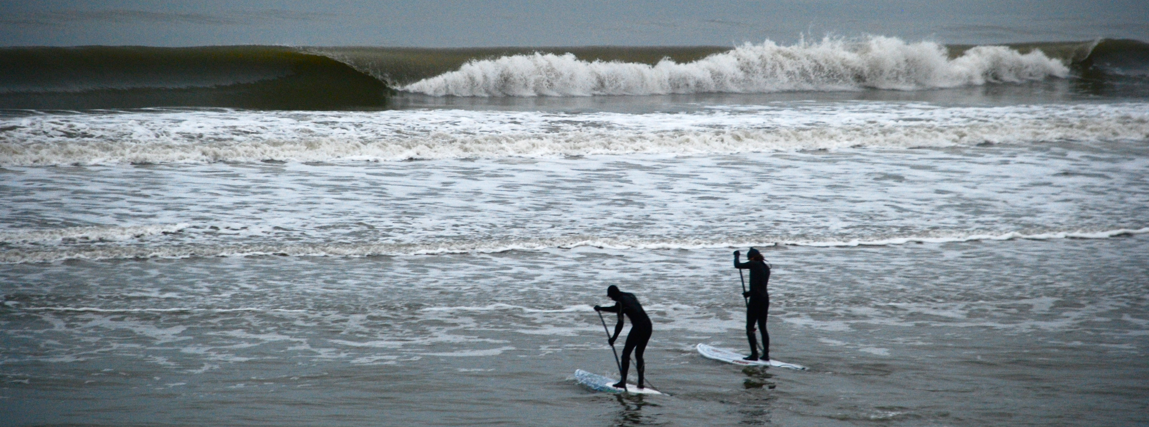 Surfen Parnassia
