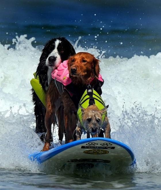 honden surfen