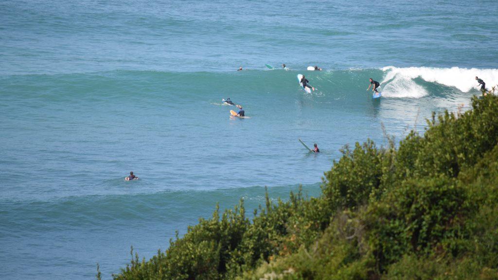 lafitenia surf