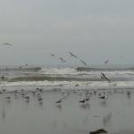 Surfen zaterdag 12 oktober 05