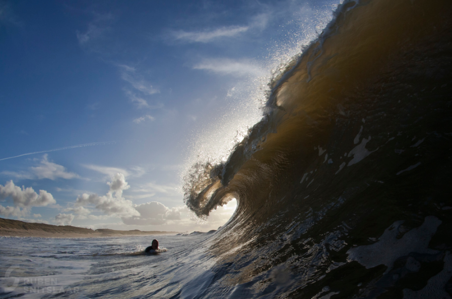 Parnassia surf