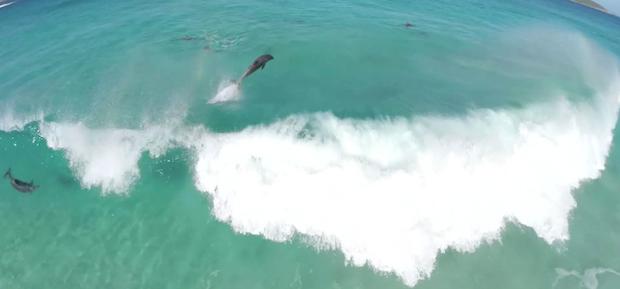 surfende dolfijnen