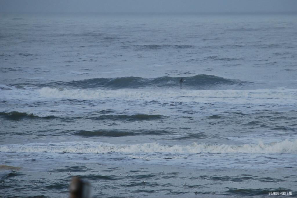 surf 1 februari 2015 parnassia