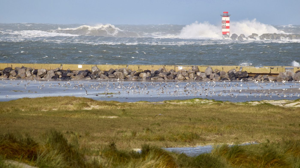 big waves holland