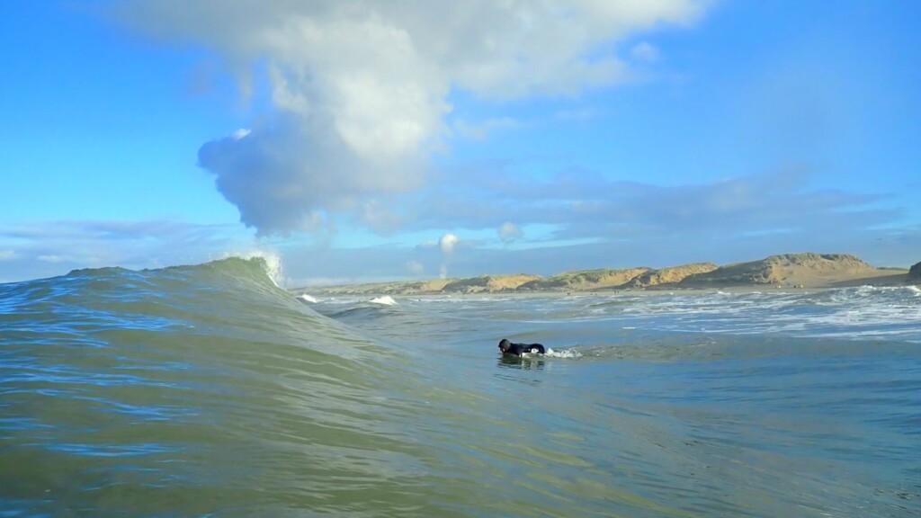 Parnassia shorebreak