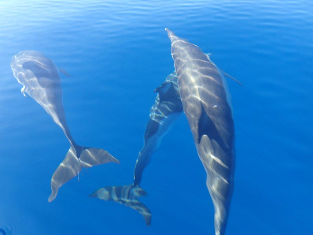 Dolfijnen In de Algarve