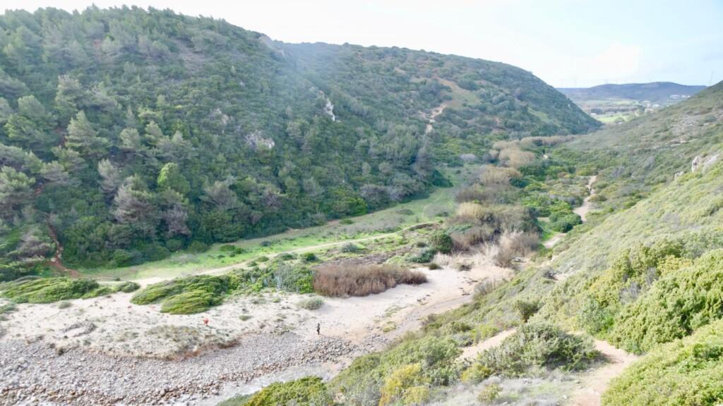 figueira vallei