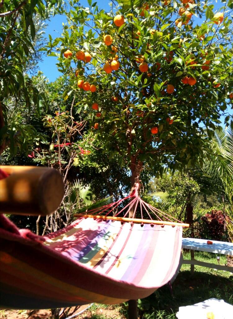 garden Surf Paradise Morocco