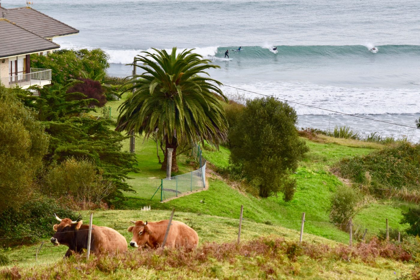 Surf Oyambre